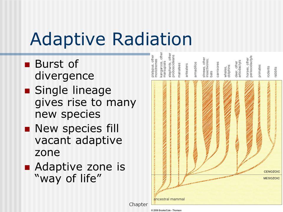 Adaptive Radiation Burst of divergence