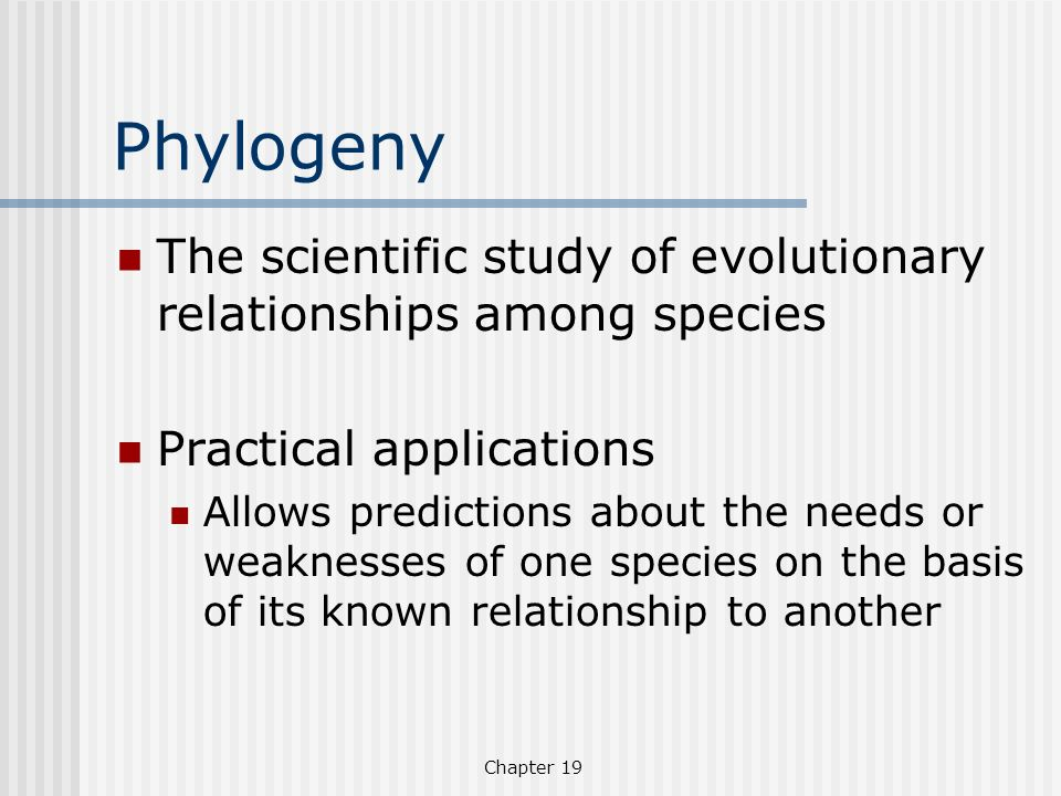 Phylogeny The scientific study of evolutionary relationships among species. Practical applications.