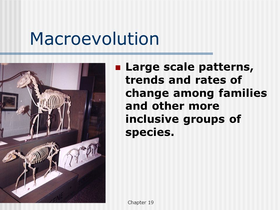 Macroevolution Large scale patterns, trends and rates of change among families and other more inclusive groups of species.