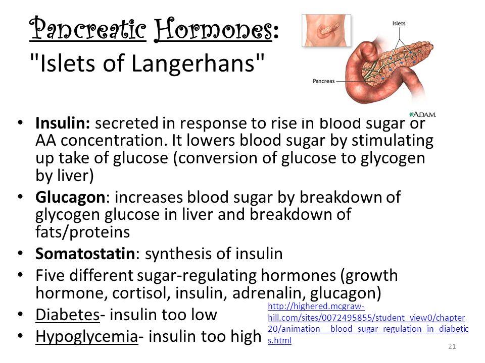Pancreatic Hormones: Islets of Langerhans