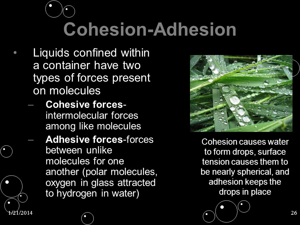 Cohesion-Adhesion Liquids confined within a container have two types of forces present on molecules.