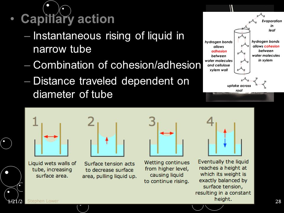 Capillary action Instantaneous rising of liquid in narrow tube
