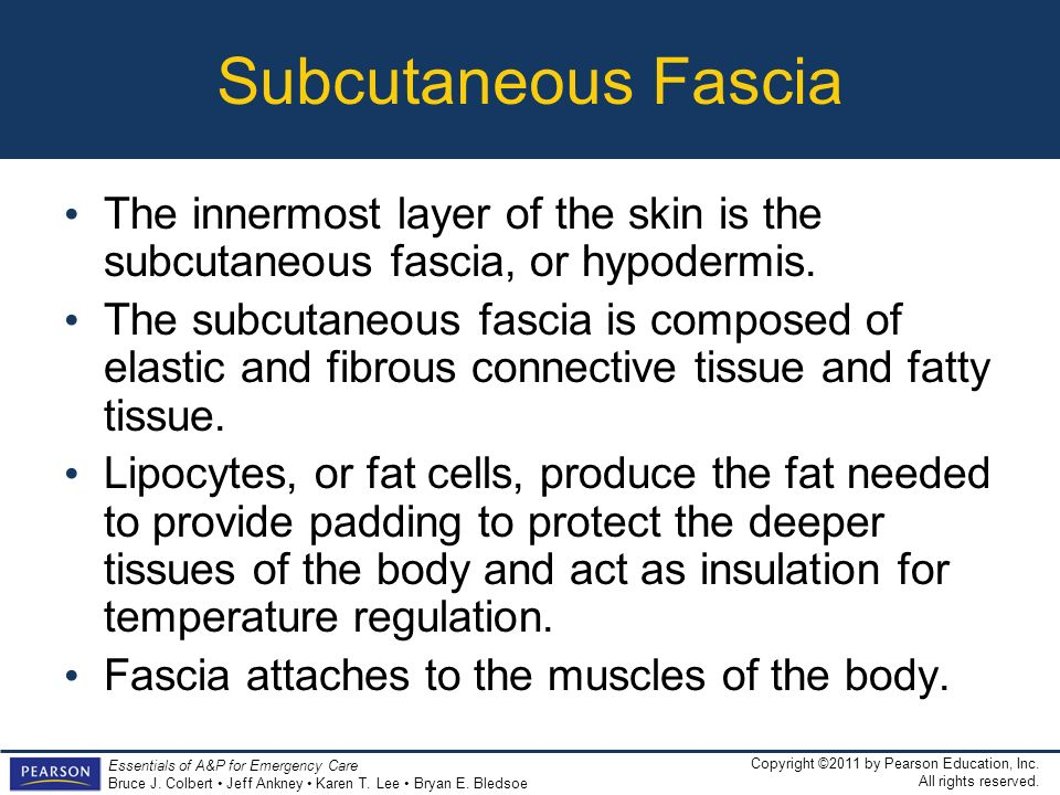 Subcutaneous Fascia The innermost layer of the skin is the subcutaneous fascia, or hypodermis.