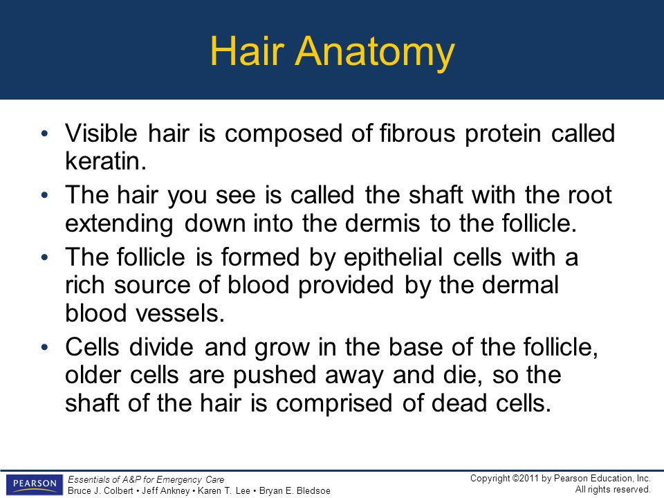 Hair Anatomy Visible hair is composed of fibrous protein called keratin.
