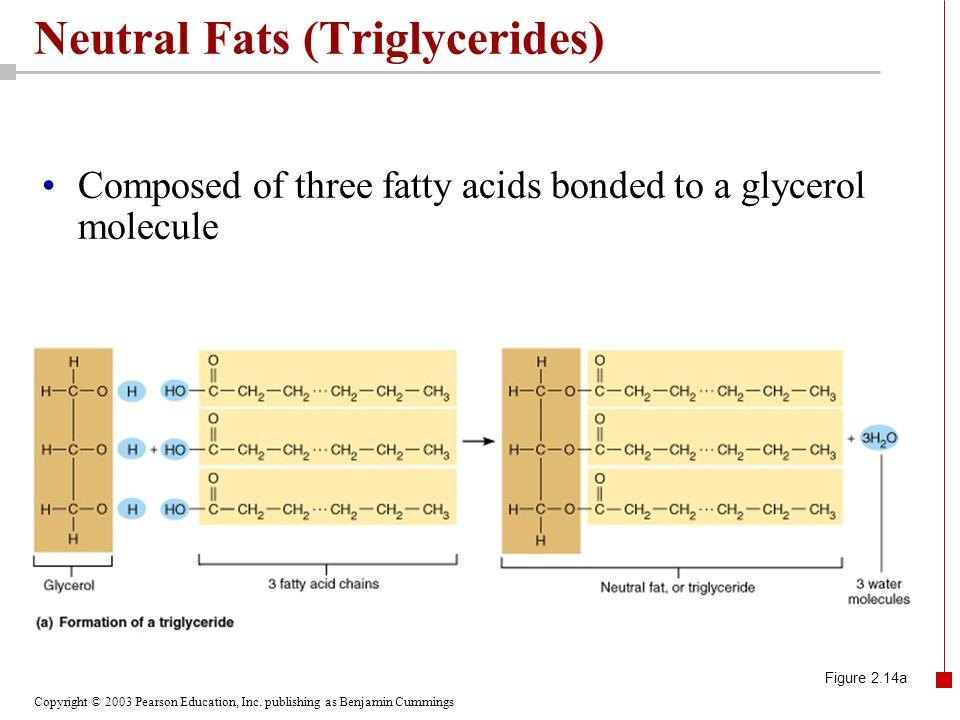 Neutral Fats (Triglycerides)