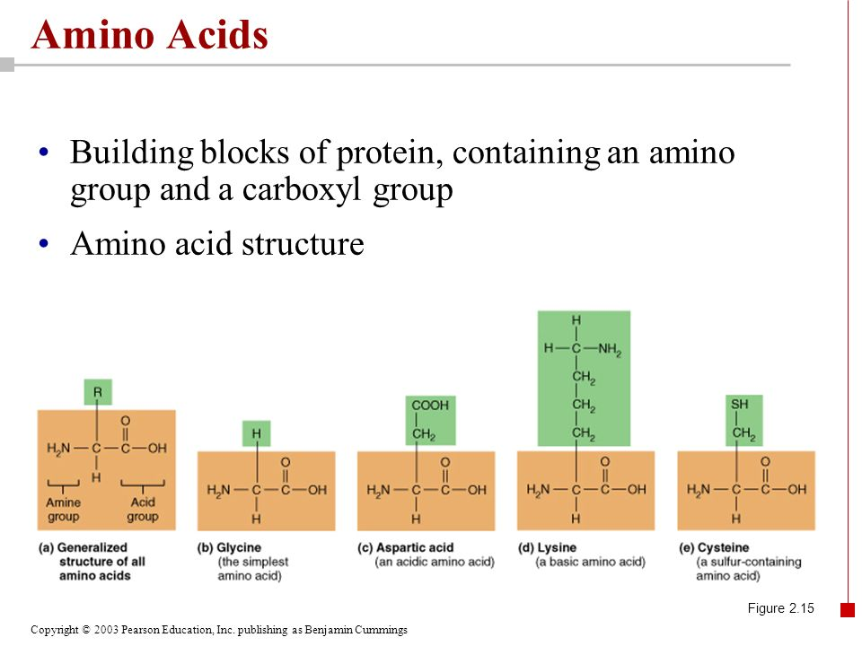 Amino Acids Building blocks of protein, containing an amino group and a carboxyl group. Amino acid structure.