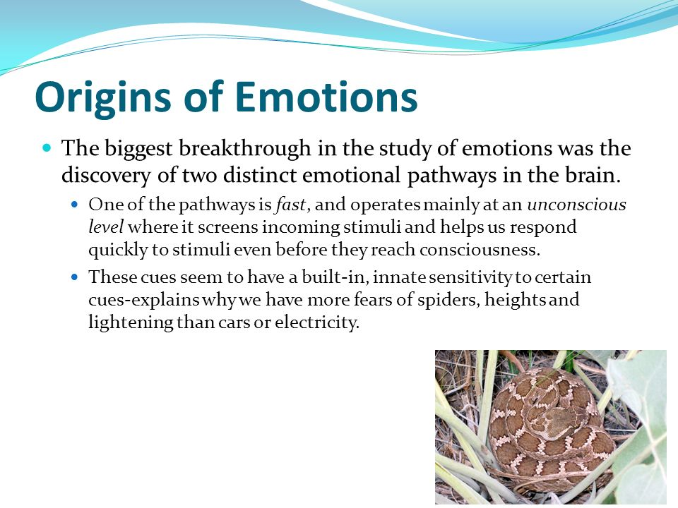 Origins of Emotions The biggest breakthrough in the study of emotions was the discovery of two distinct emotional pathways in the brain.