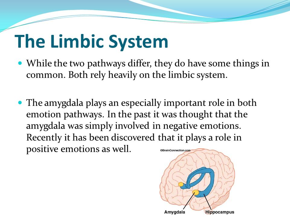 The Limbic System While the two pathways differ, they do have some things in common. Both rely heavily on the limbic system.