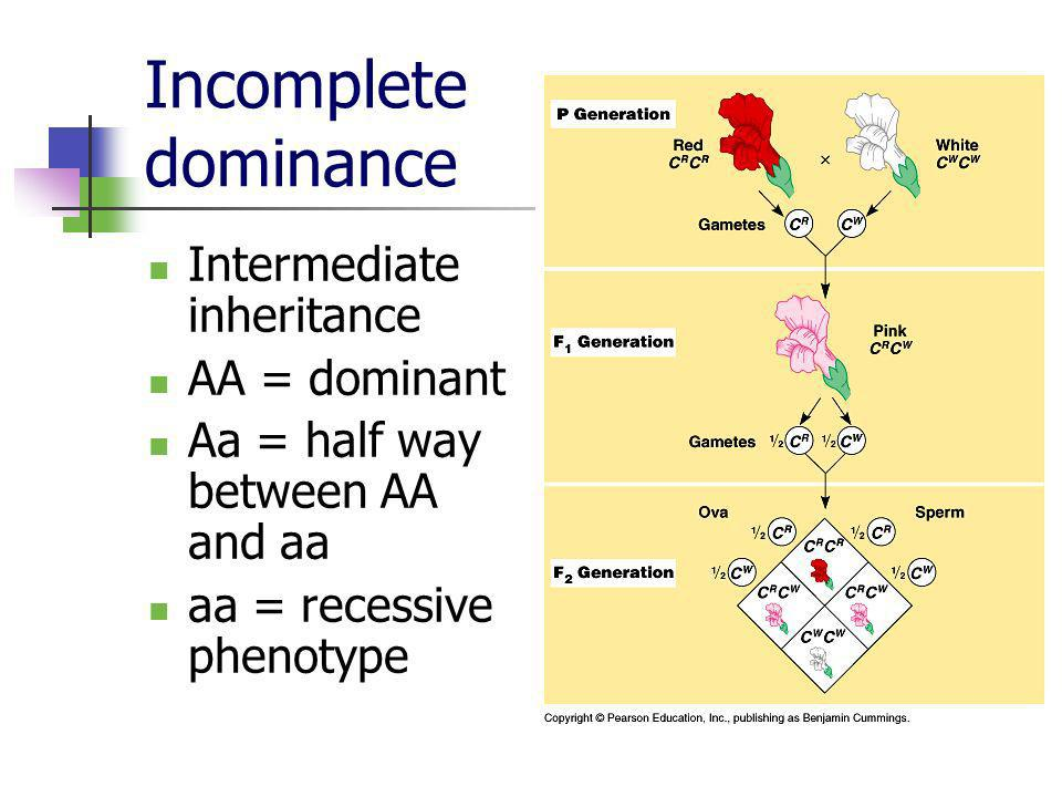 Incomplete dominance Intermediate inheritance AA = dominant