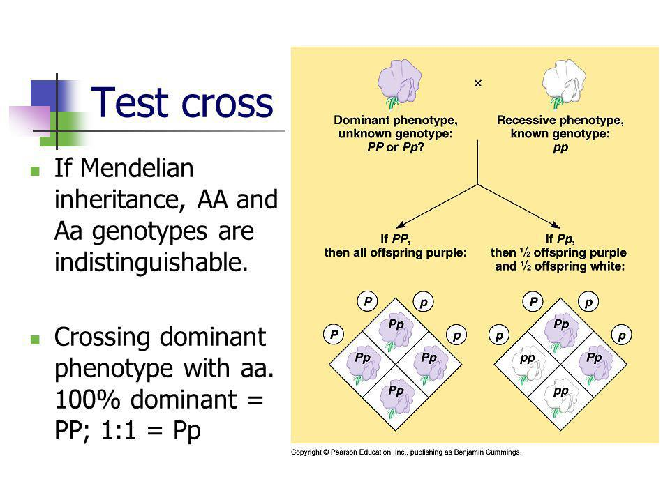 Test cross If Mendelian inheritance, AA and Aa genotypes are indistinguishable.