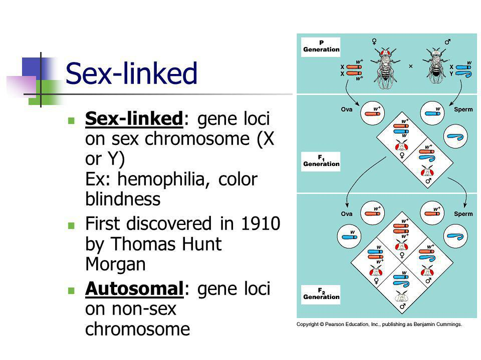 Sex-linked Sex-linked: gene loci on sex chromosome (X or Y) Ex: hemophilia, color blindness. First discovered in 1910 by Thomas Hunt Morgan.