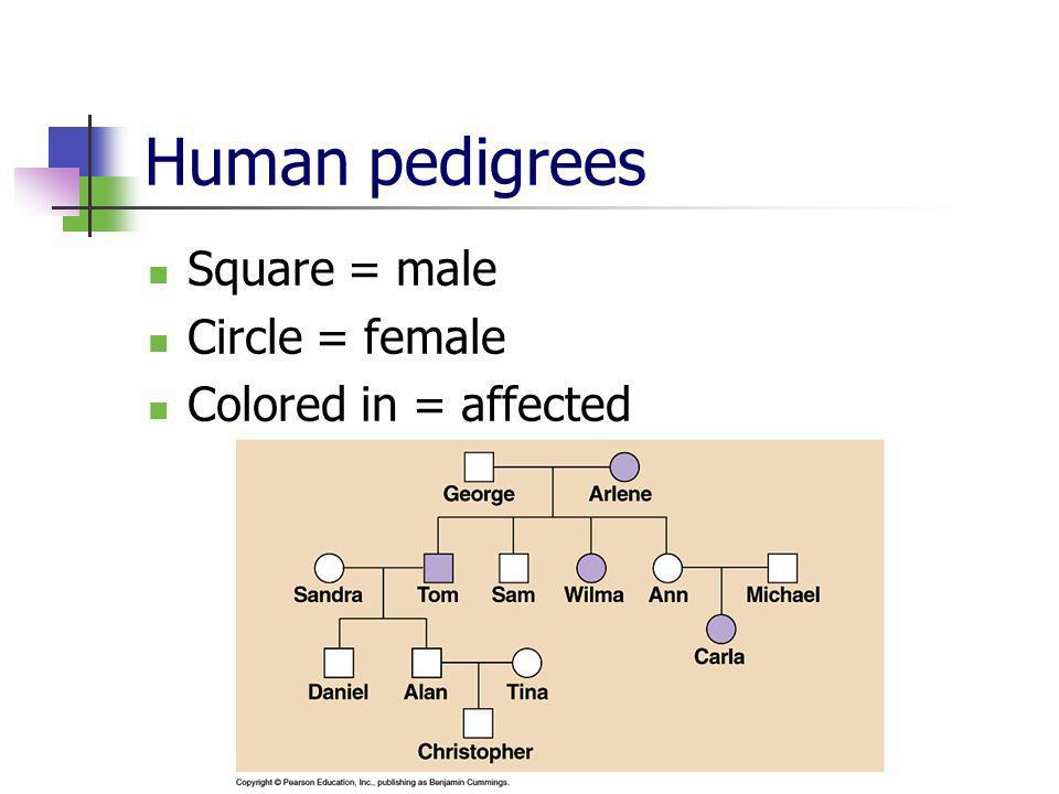 Human pedigrees Square = male Circle = female Colored in = affected