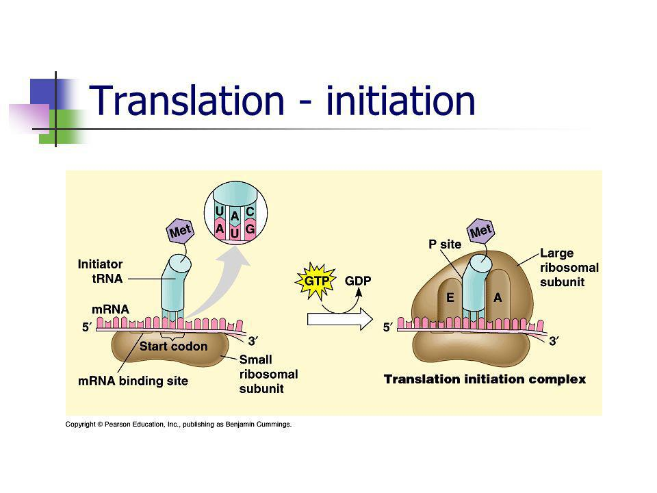 Translation - initiation