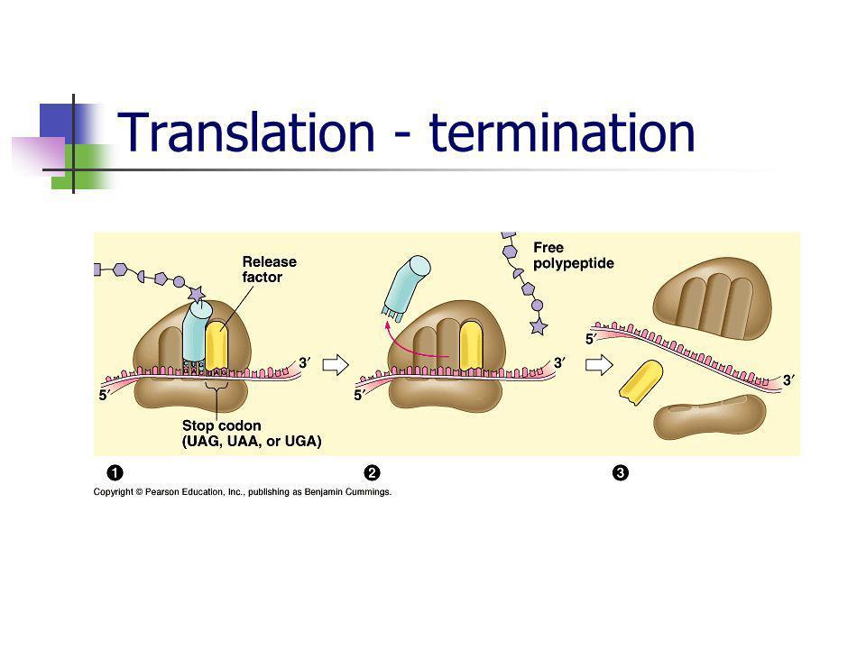 Translation - termination
