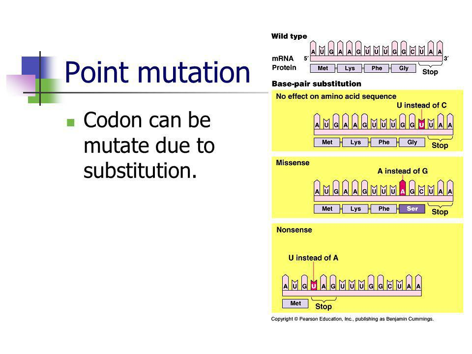 Point mutation Codon can be mutate due to substitution.
