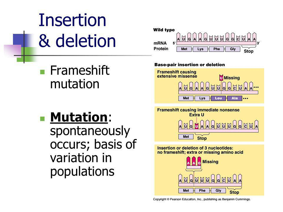 Insertion & deletion Frameshift mutation