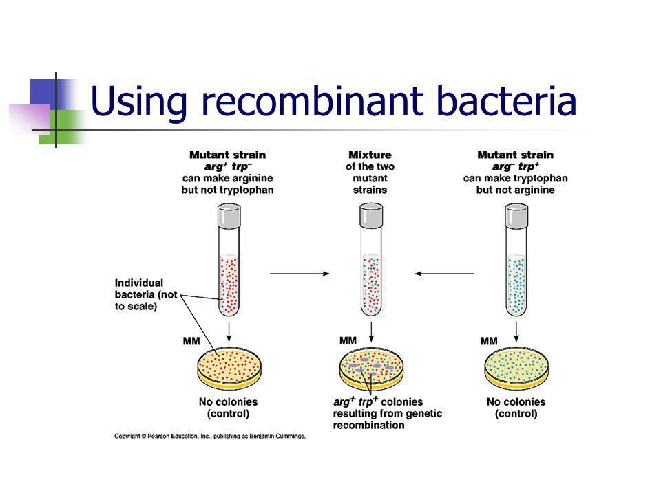 Using recombinant bacteria