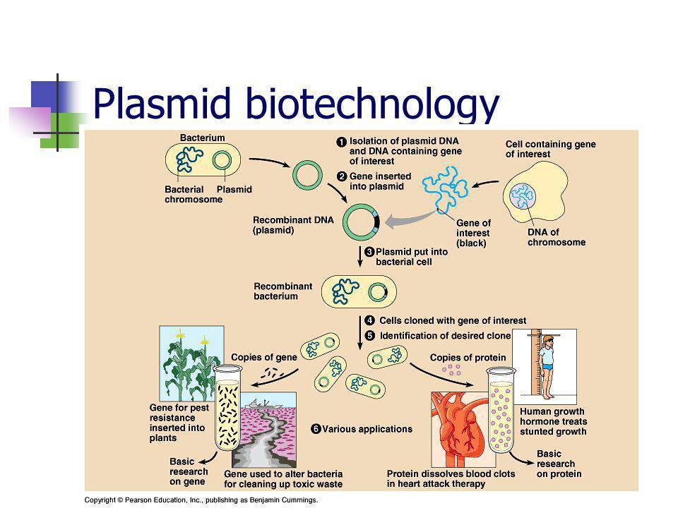 Plasmid biotechnology