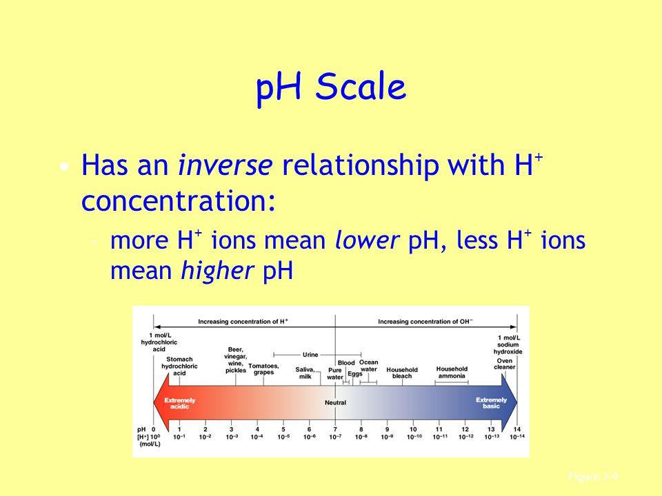pH Scale Has an inverse relationship with H+ concentration: