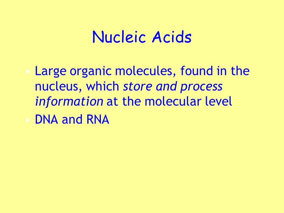 Nucleic Acids Large organic molecules, found in the nucleus, which store and process information at the molecular level.