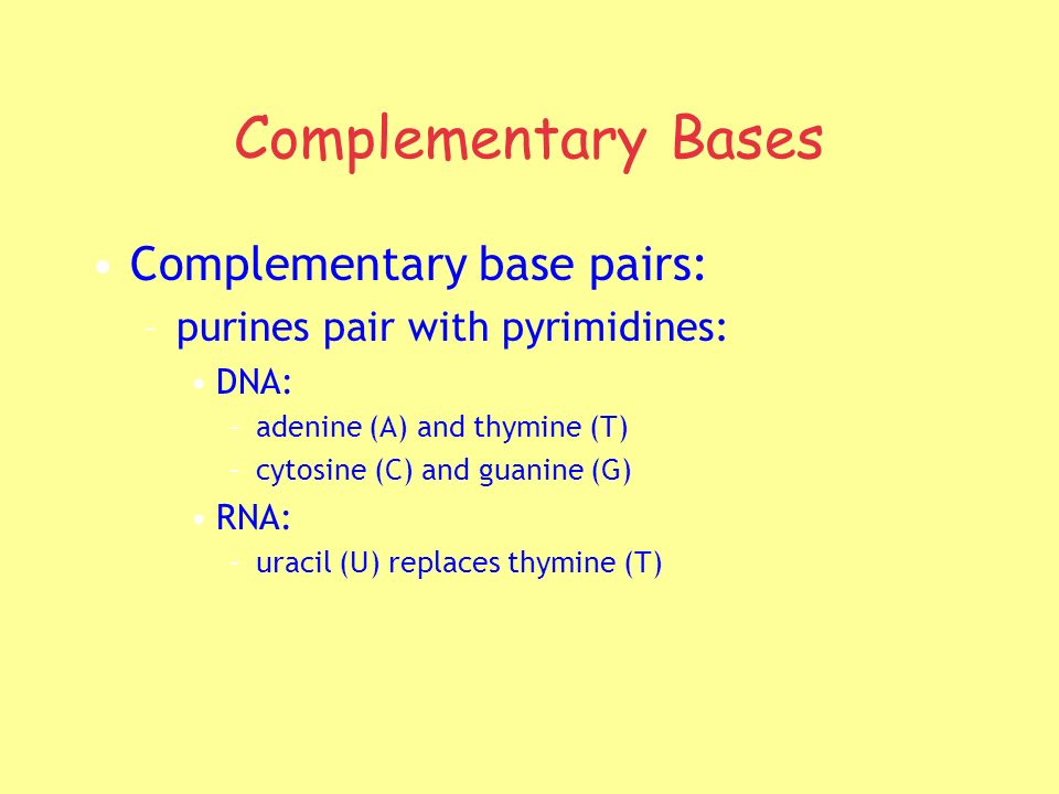 Complementary Bases Complementary base pairs: