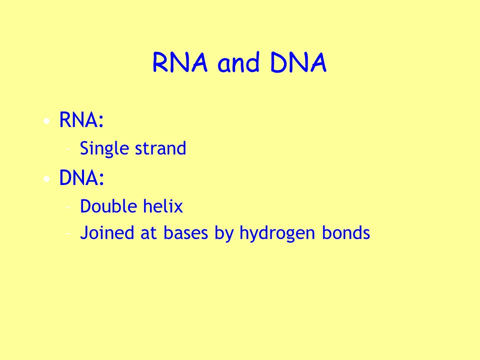 RNA and DNA RNA: DNA: Single strand Double helix