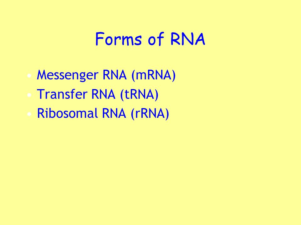 Forms of RNA Messenger RNA (mRNA) Transfer RNA (tRNA)