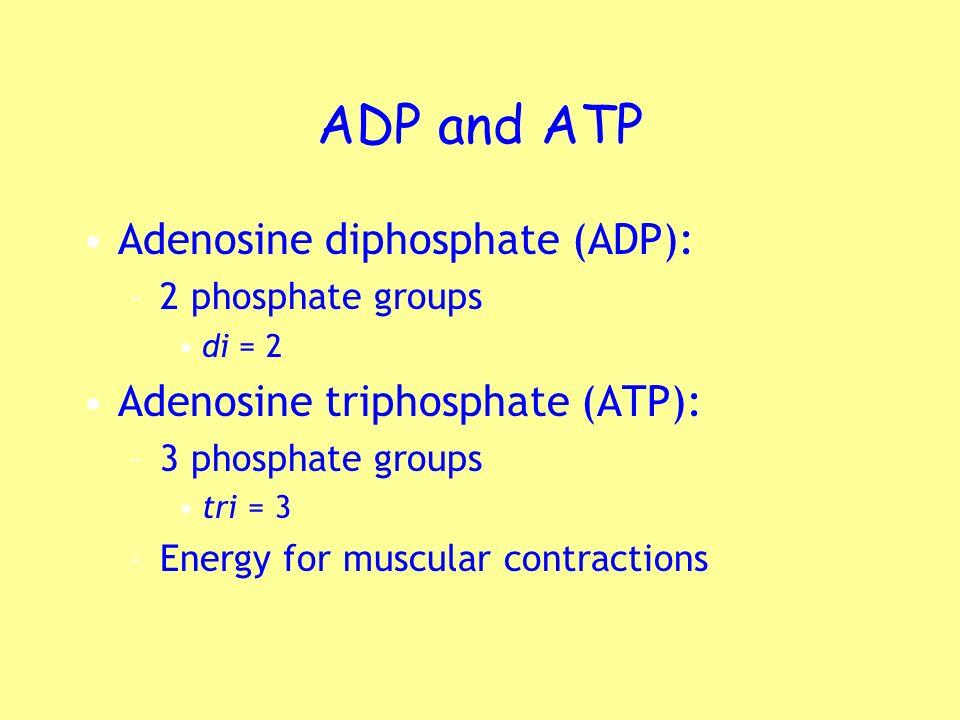 ADP and ATP Adenosine diphosphate (ADP): Adenosine triphosphate (ATP):