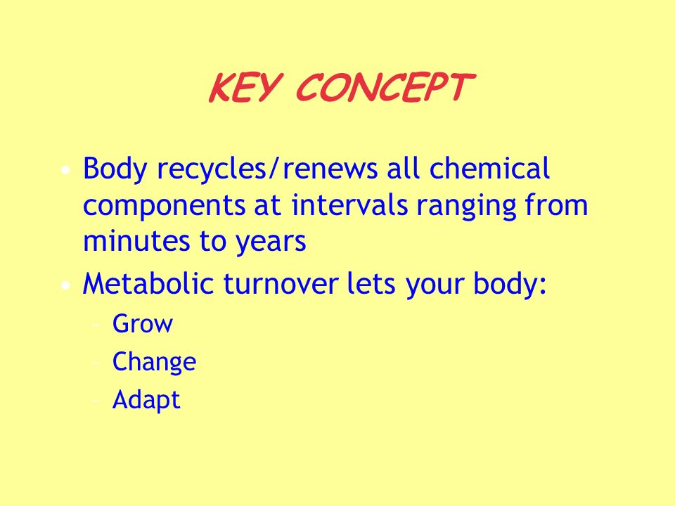 KEY CONCEPT Body recycles/renews all chemical components at intervals ranging from minutes to years.