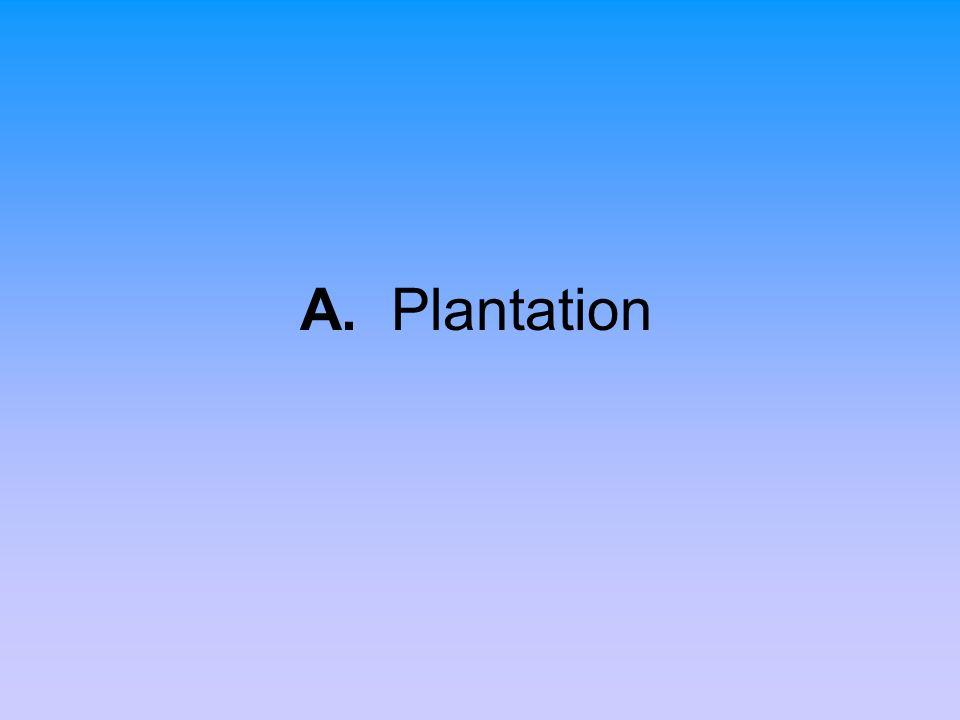 A. Plantation