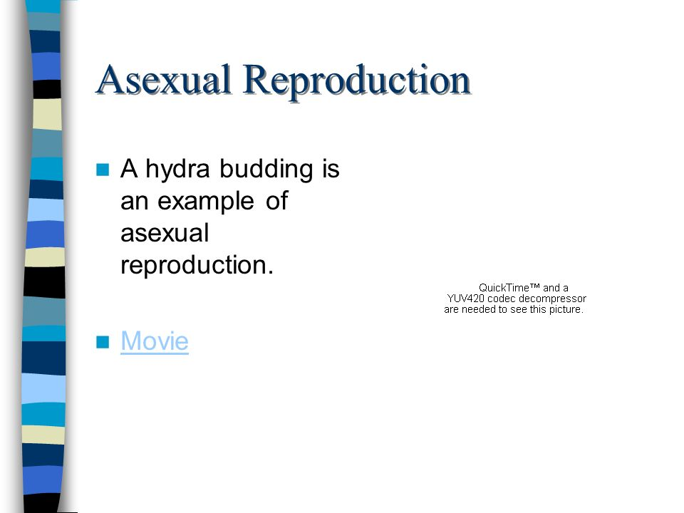 Asexual Reproduction A hydra budding is an example of asexual reproduction. Movie