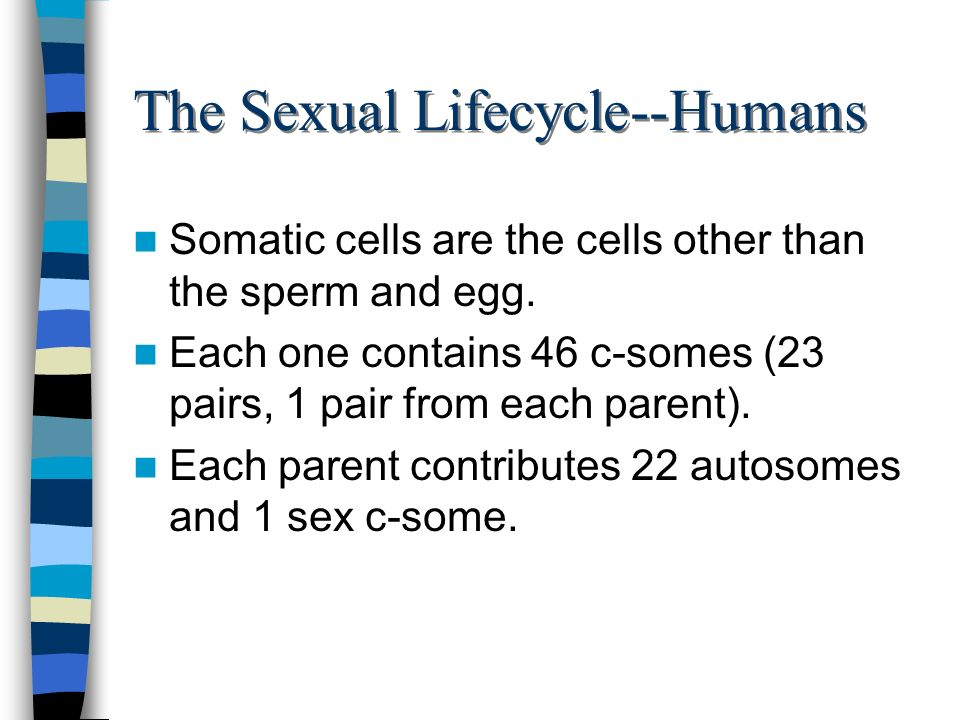 The Sexual Lifecycle--Humans