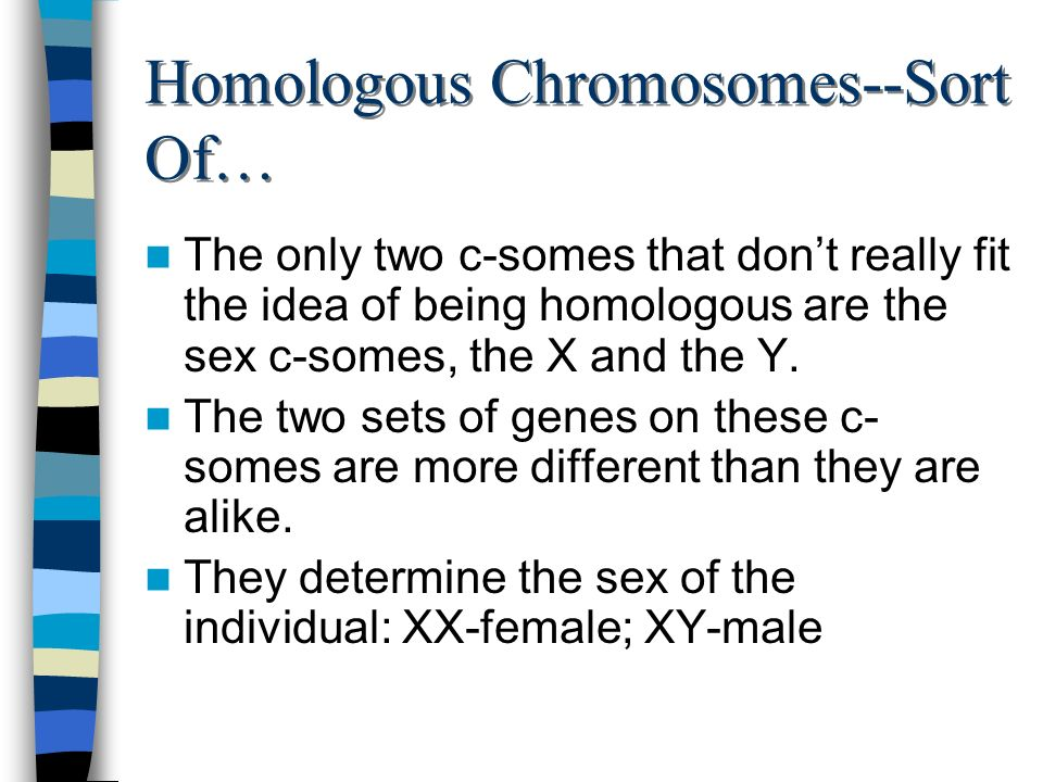 Homologous Chromosomes--Sort Of…