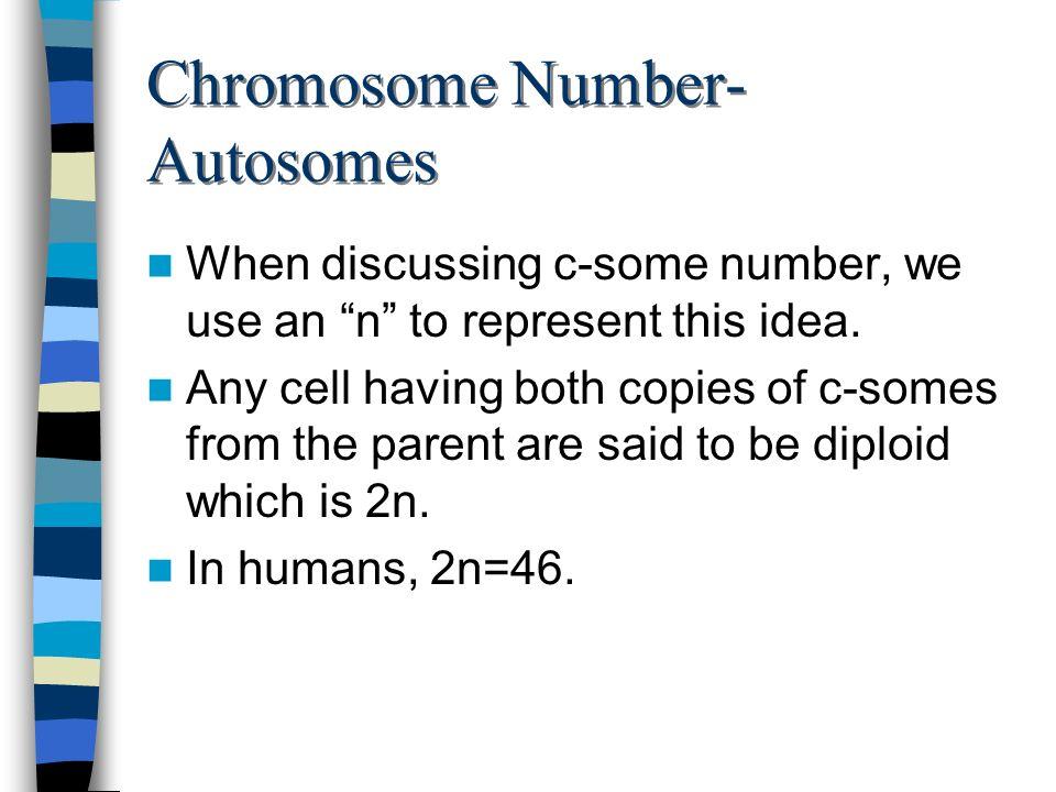Chromosome Number-Autosomes