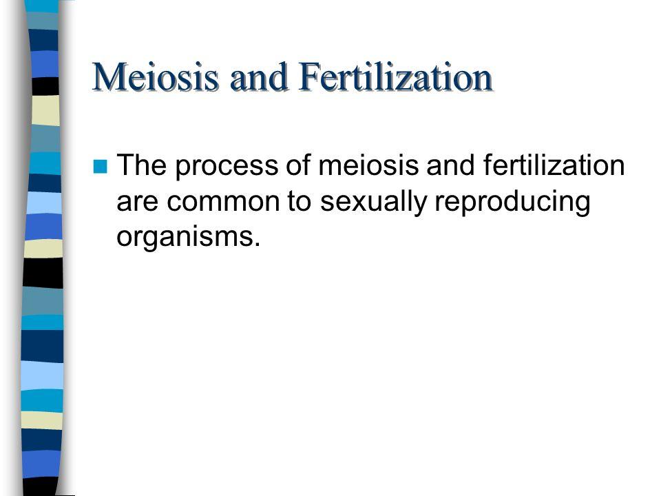 Meiosis and Fertilization