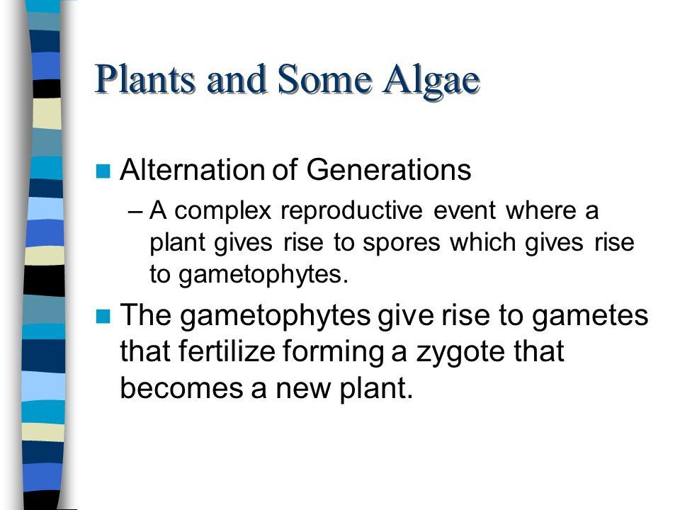 Plants and Some Algae Alternation of Generations