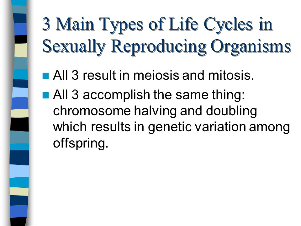 3 Main Types of Life Cycles in Sexually Reproducing Organisms