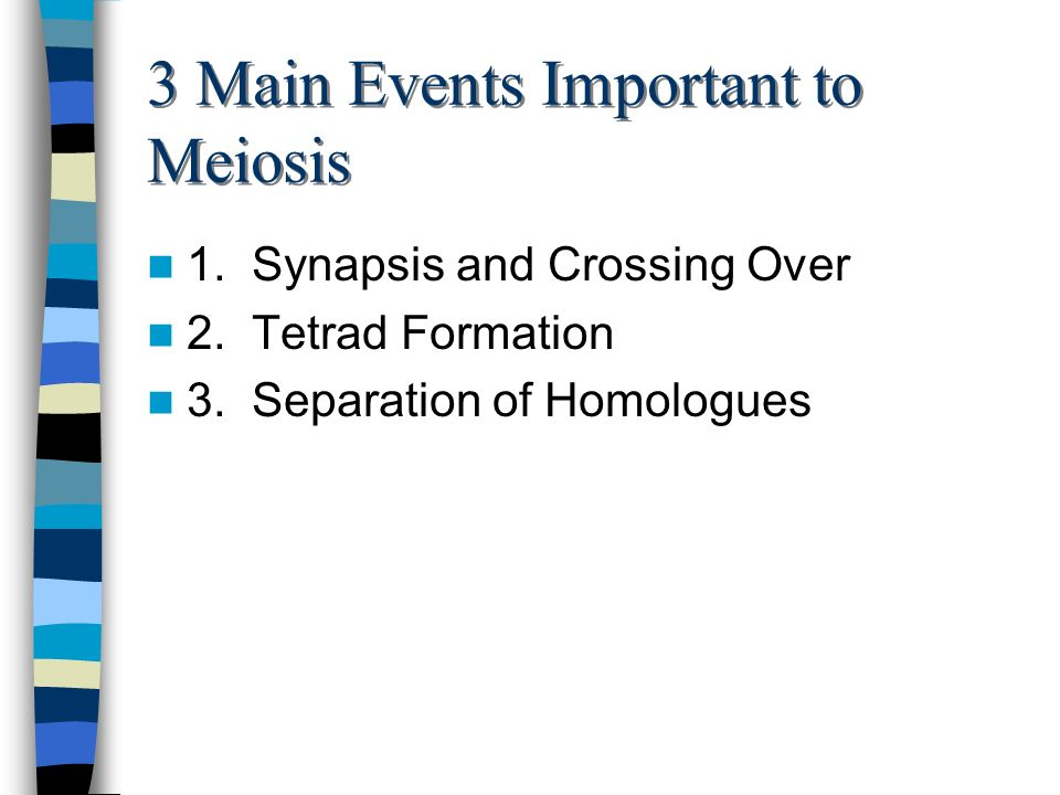 3 Main Events Important to Meiosis