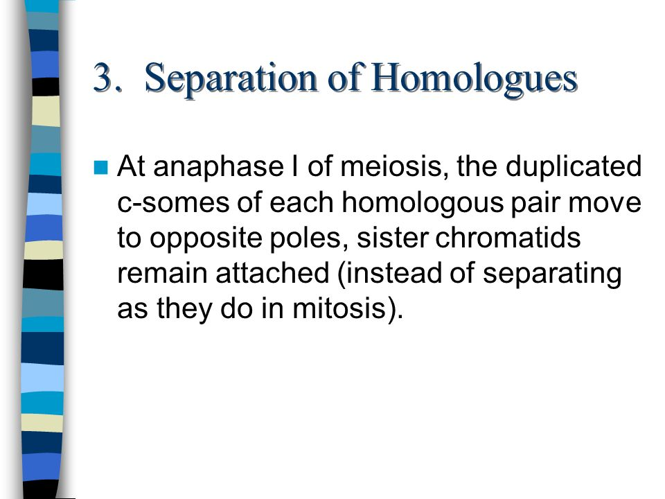 3. Separation of Homologues