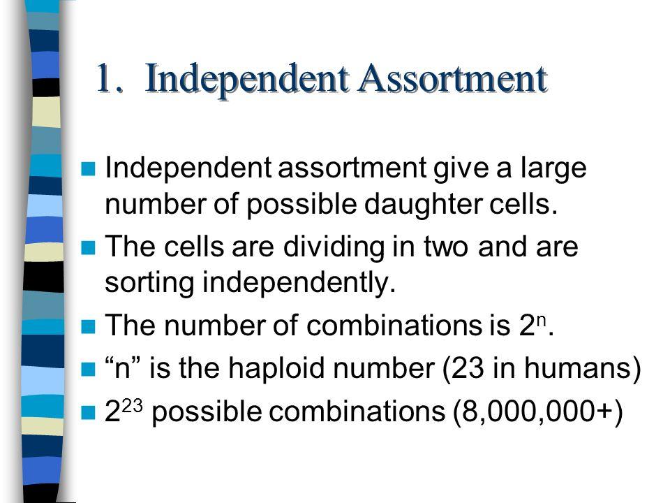 1. Independent Assortment