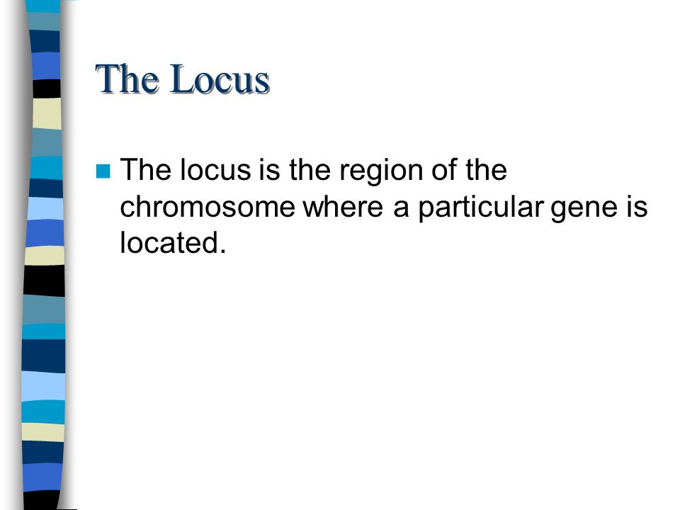 The Locus The locus is the region of the chromosome where a particular gene is located.