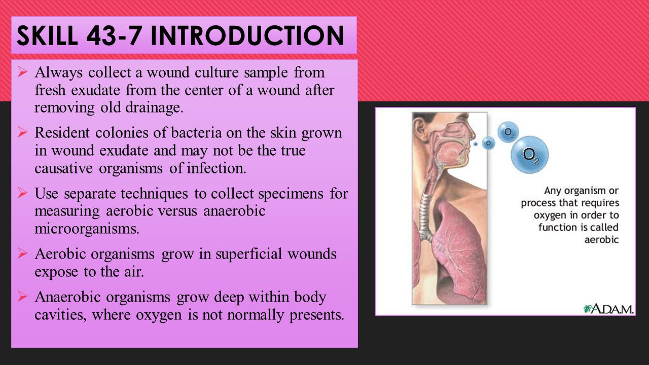 SKILL 43-7 INTRODUCTION Always collect a wound culture sample from fresh exudate from the center of a wound after removing old drainage.