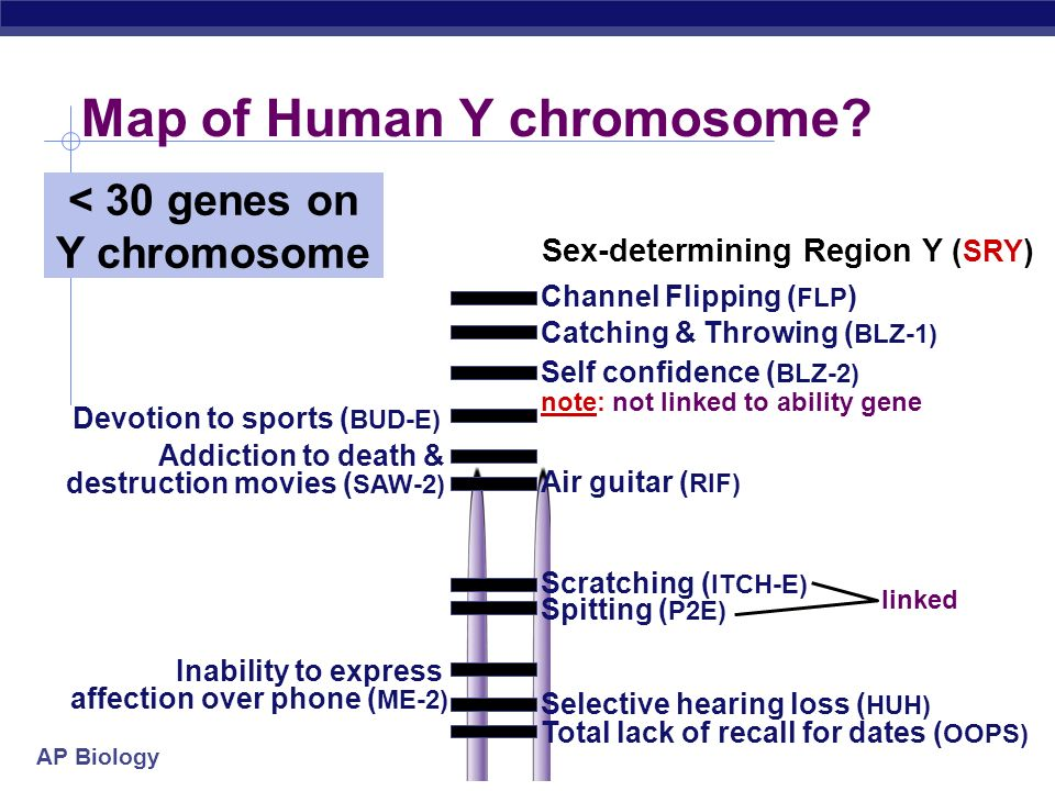 Map of Human Y chromosome