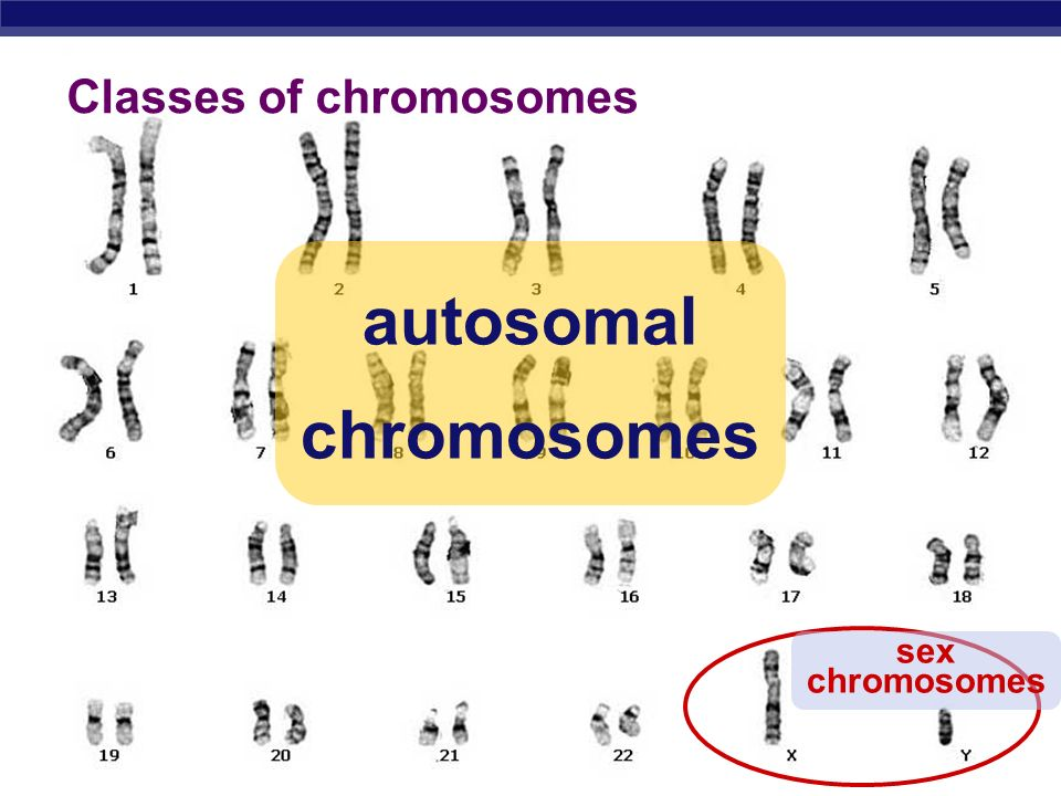 Classes of chromosomes