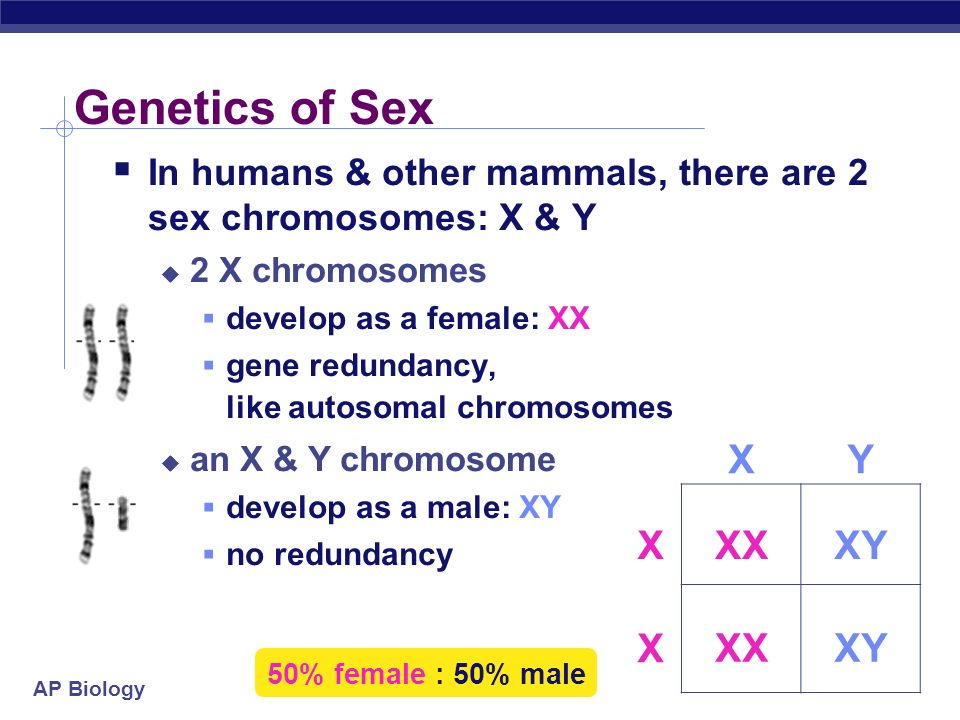Genetics of Sex X Y X XX XY X XX XY