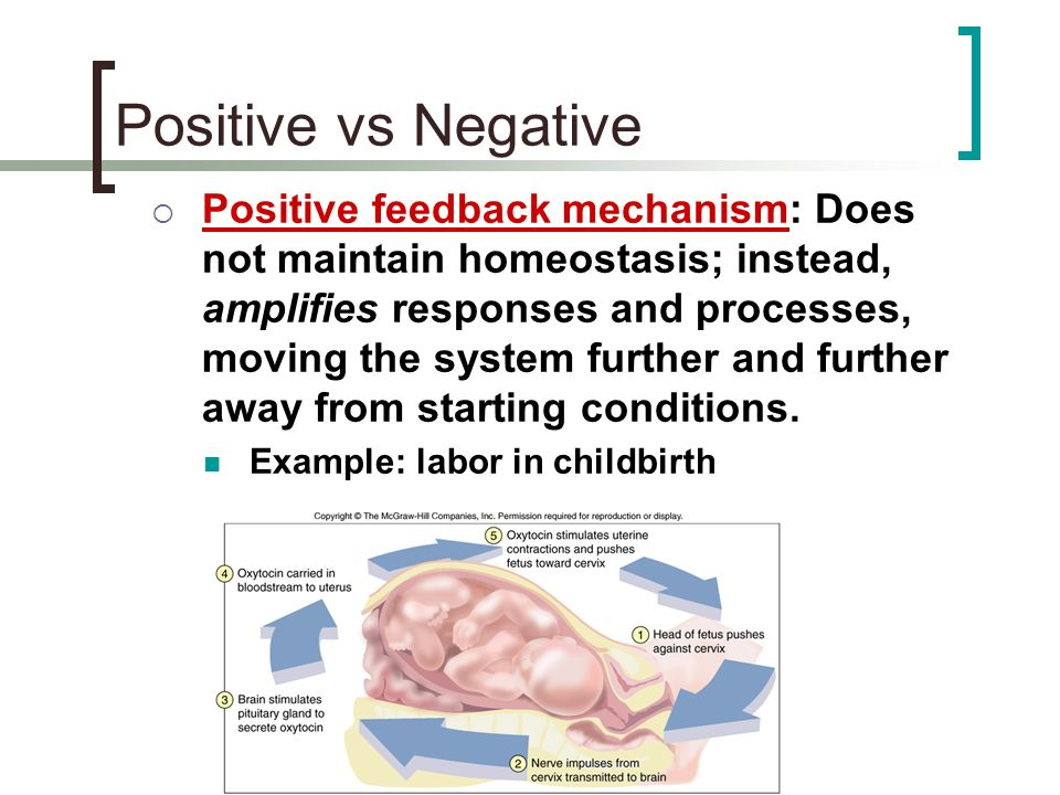 Positive Feedback Loop Childbirth Cell Communication and...