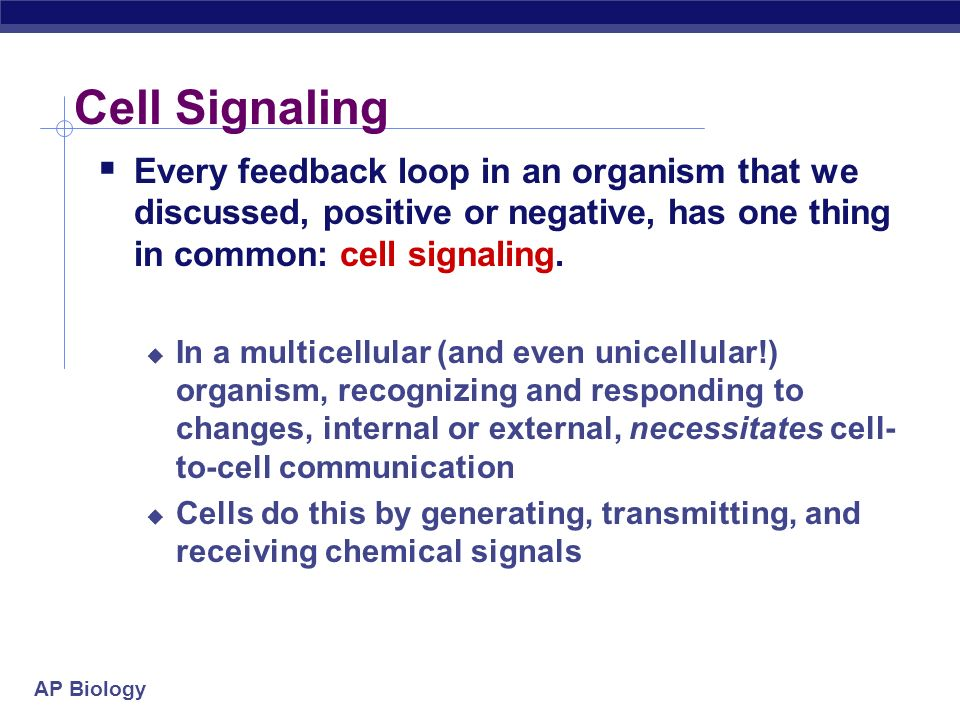 Cell Signaling Every feedback loop in an organism that we discussed, positive or negative, has one thing in common: cell signaling.