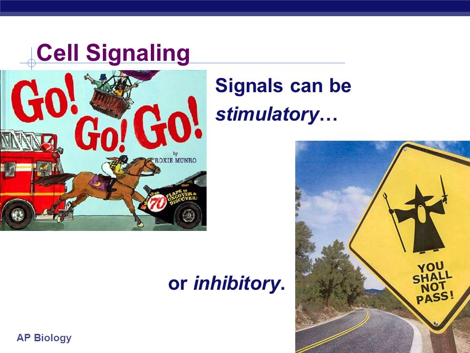 Cell Signaling Signals can be stimulatory… or inhibitory.
