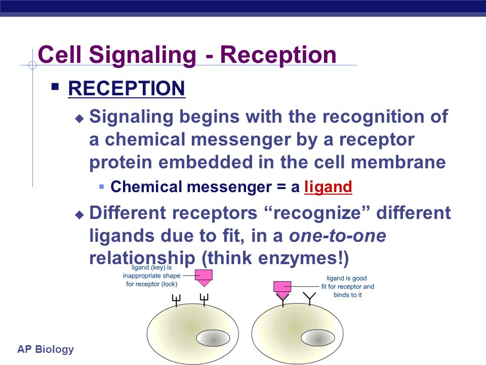 Cell Signaling - Reception