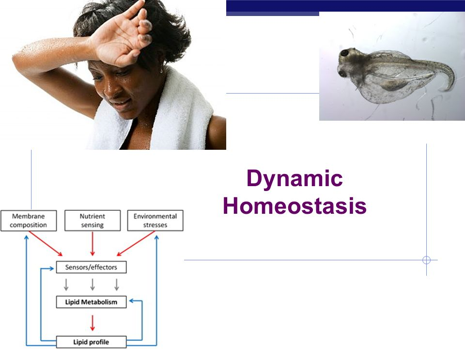 Dynamic Homeostasis 2